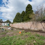 South facing wall that has been cleared and replanted with fruit trees