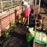 Kim and Ludmilla doing great work getting all the tomatoes in.