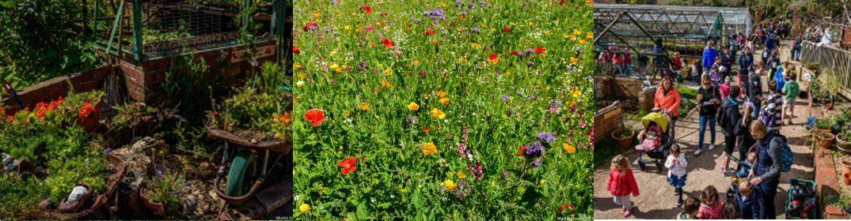 Blaise Community Garden